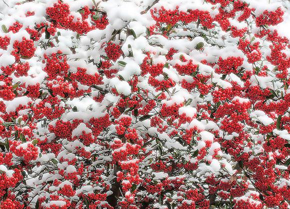 zdjecia-zimy-17