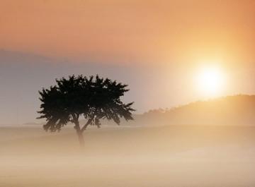 fotografia-drzew-0