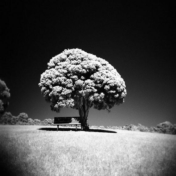 fotografia-drzew-1