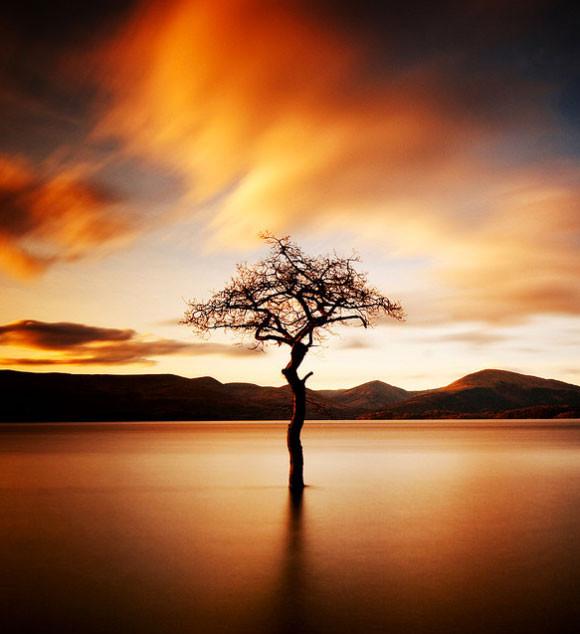 fotografia-drzew-3