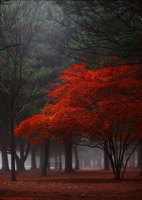 fotografia-drzew-4