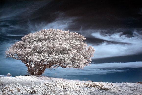 fotografia-drzew-5