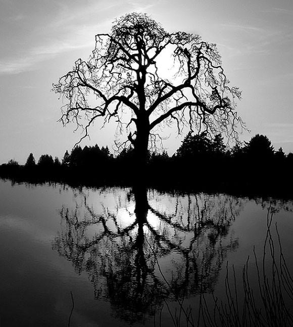 fotografia-drzew-6