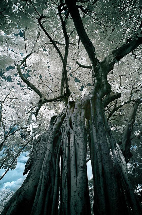 fotografia-drzew-7