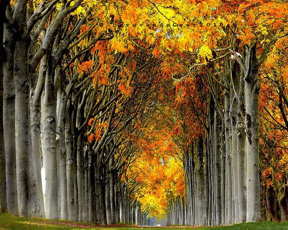 fotografia-drzew-8