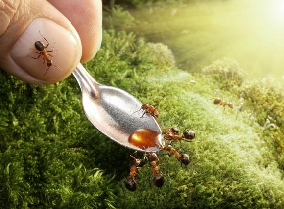 Mrowkowe-opowieści-Andrey-Pavlov1