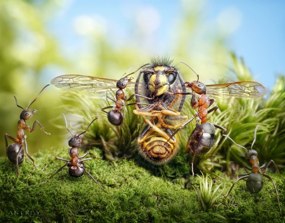 Mrowkowe-opowieści-Andrey-Pavlov10