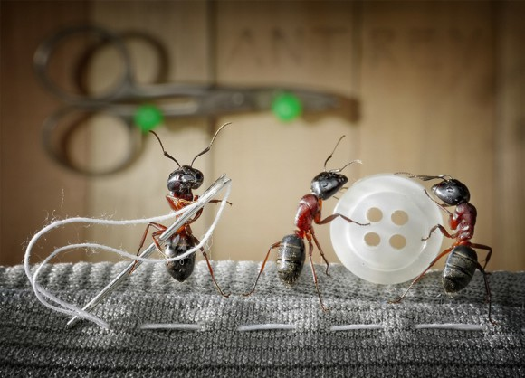 Mrowkowe-opowieści-Andrey-Pavlov11