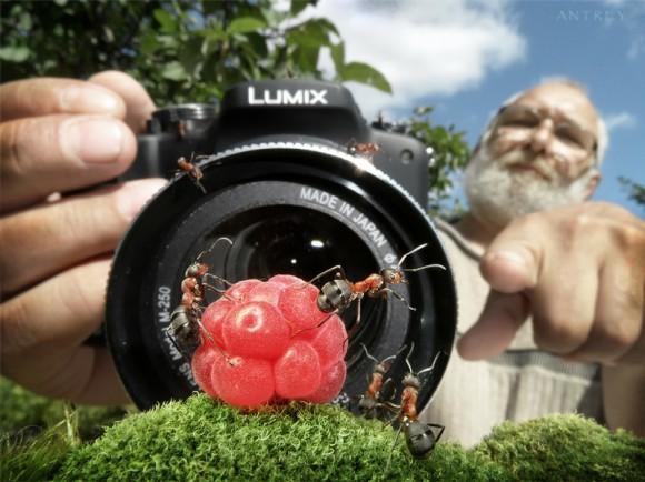 Mrowkowe-opowieści-Andrey-Pavlov3