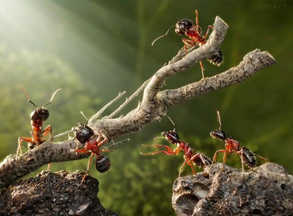 Mrowkowe-opowieści-Andrey-Pavlov4