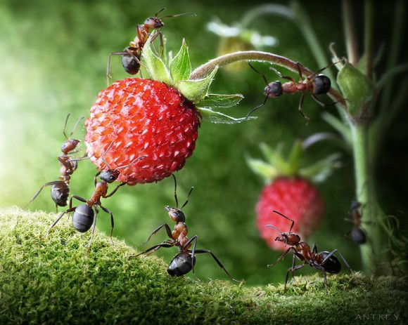 Mrowkowe-opowieści-Andrey-Pavlov6