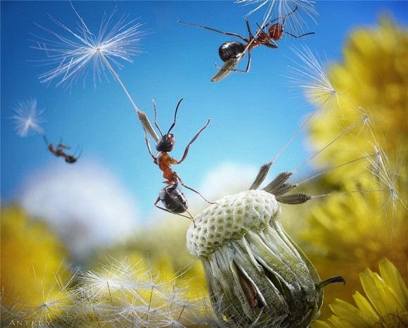 Mrowkowe-opowieści-Andrey-Pavlov7