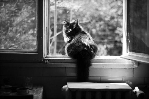kocie-tajemnice1