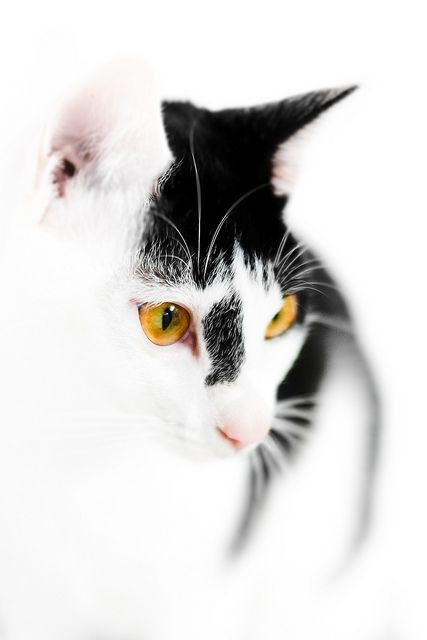 Źródło: catnday.com