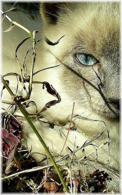 kocie-tajemnice3