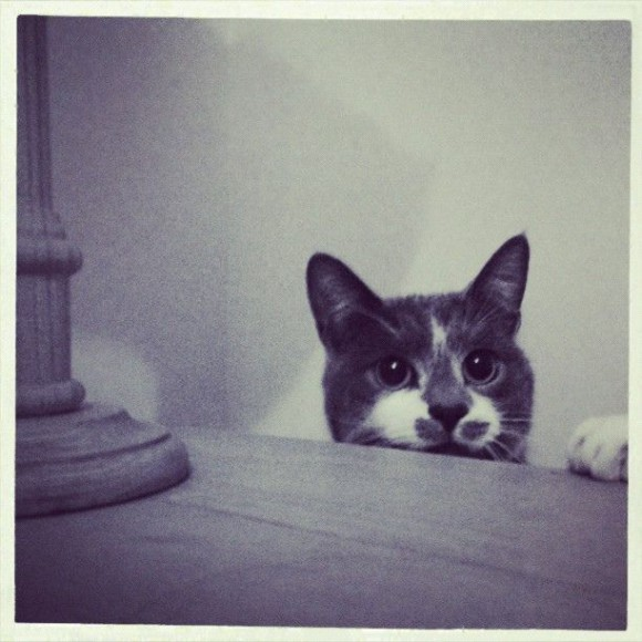 kocie-tajemnice4