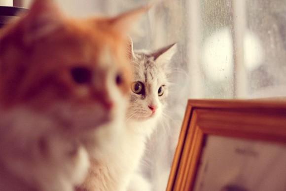 kocie-tajemnice5