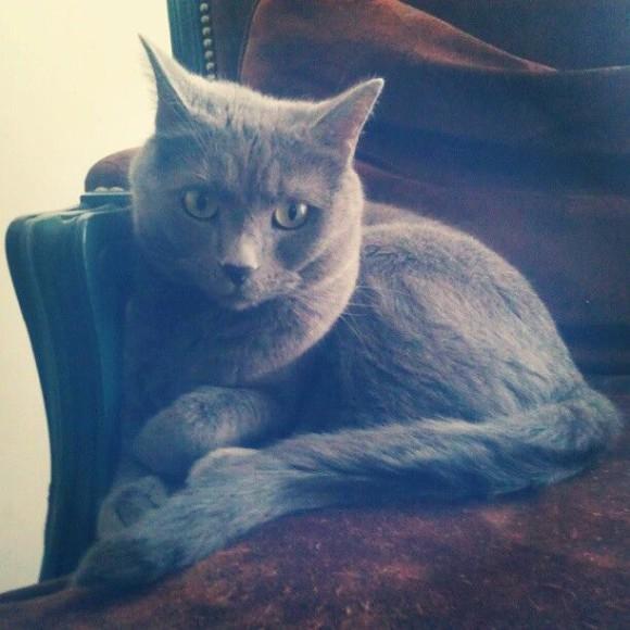 kocie-tajemnice6