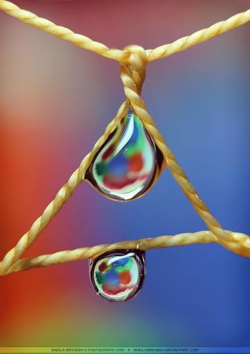 Makrofotografia, krople wody - Sheila Brinson zdjęcie - 6