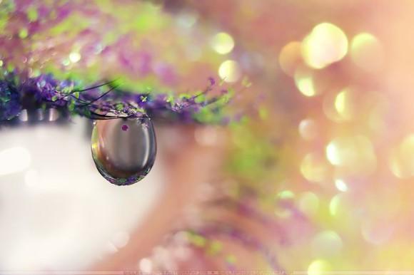 Makrofotografia, krople wody - Sheila Brinson zdjęcie - 7