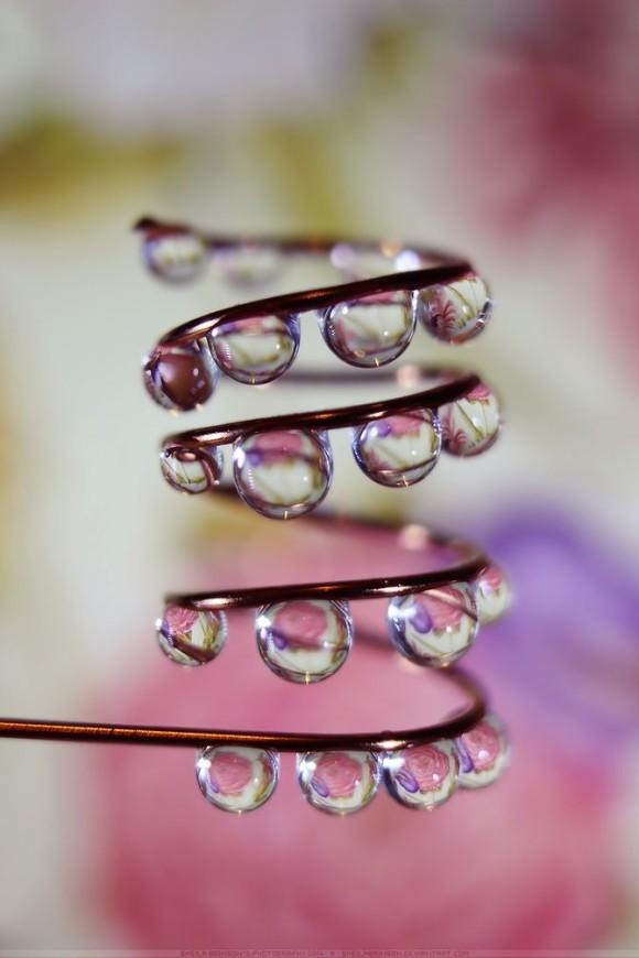 Makrofotografia, krople wody - Sheila Brinson zdjęcie - 9
