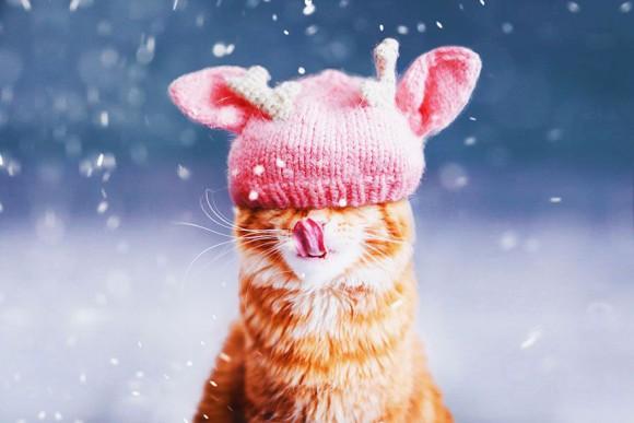 Śmieszne zdjecia kotów - Kristina Makeeva - zdjęcie 10