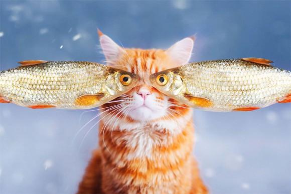 Śmieszne zdjecia kotów - Kristina Makeeva - zdjęcie 11