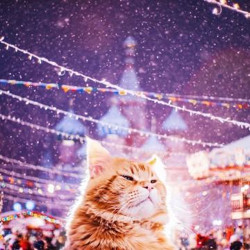 Śmieszne zdjecia kotów - Kristina Makeeva - zdjęcie 3