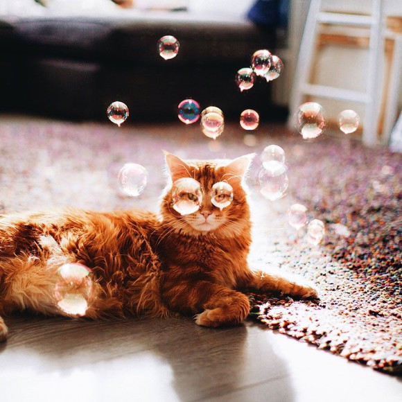 Śmieszne zdjecia kotów - Kristina Makeeva - zdjęcie 4