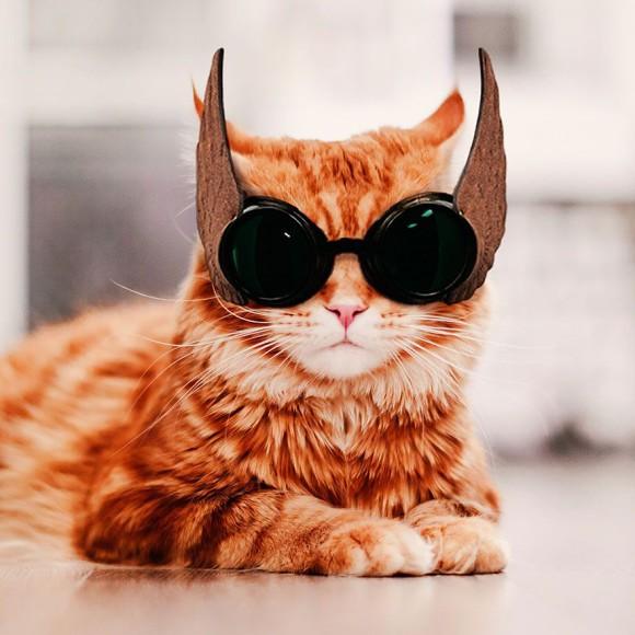 Śmieszne zdjecia kotów - Kristina Makeeva - zdjęcie 5