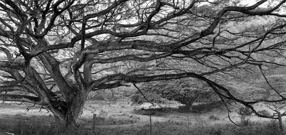 Czarno Białe Krajobrazy - Rafal Maleszyk - zdjęcie 7