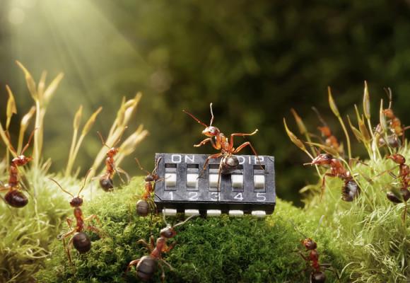 Mrowkowe-opowieści-Andrey-Pavlov12