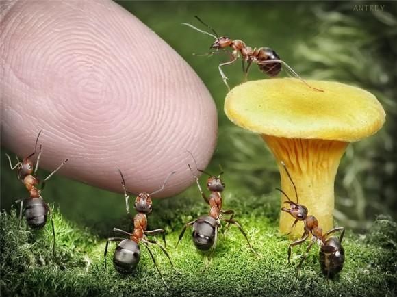 Mrowkowe-opowieści-Andrey-Pavlov5