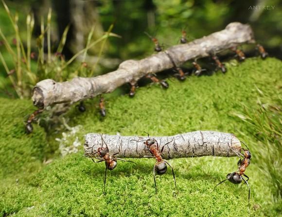 Mrowkowe-opowieści-Andrey-Pavlov9