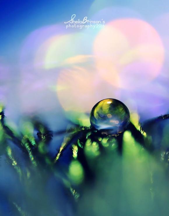 Makrofotografia, krople wody - Sheila Brinson zdjęcie - 4