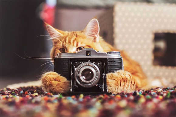 Śmieszne zdjecia kotów - Kristina Makeeva - zdjęcie 1