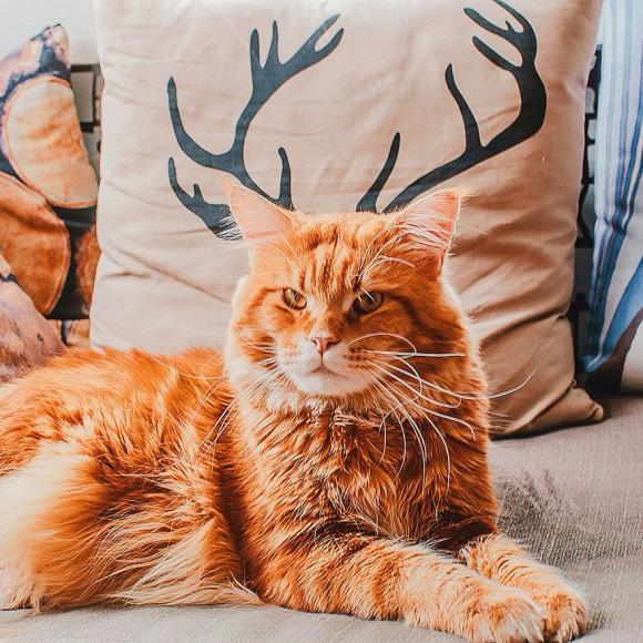 Śmieszne zdjecia kotów - Kristina Makeeva - zdjęcie 6