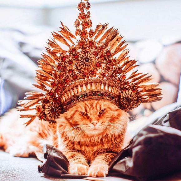 Śmieszne zdjecia kotów - Kristina Makeeva - zdjęcie 7