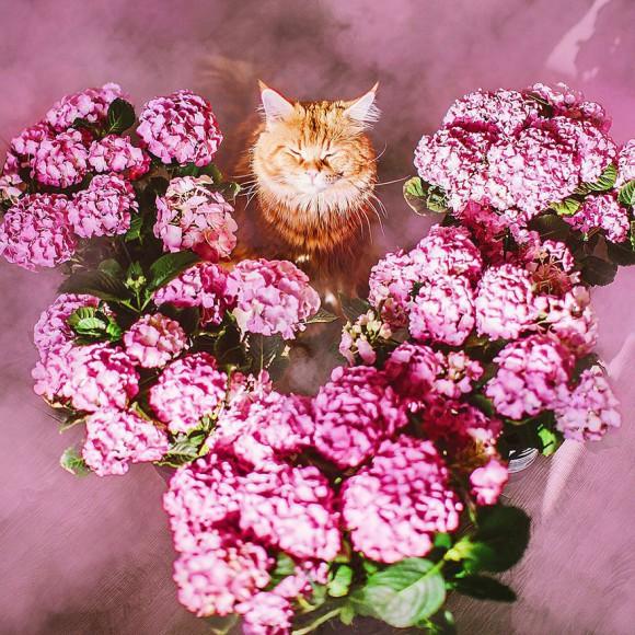Śmieszne zdjecia kotów - Kristina Makeeva - zdjęcie 8
