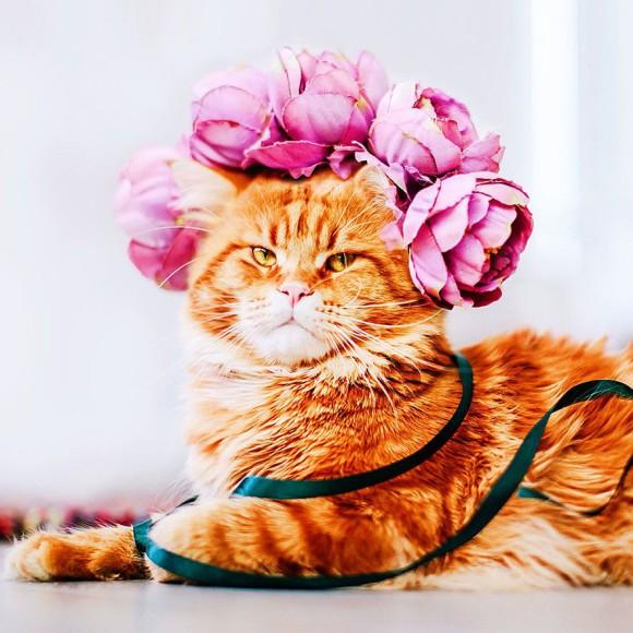 Śmieszne zdjecia kotów - Kristina Makeeva - zdjęcie 9